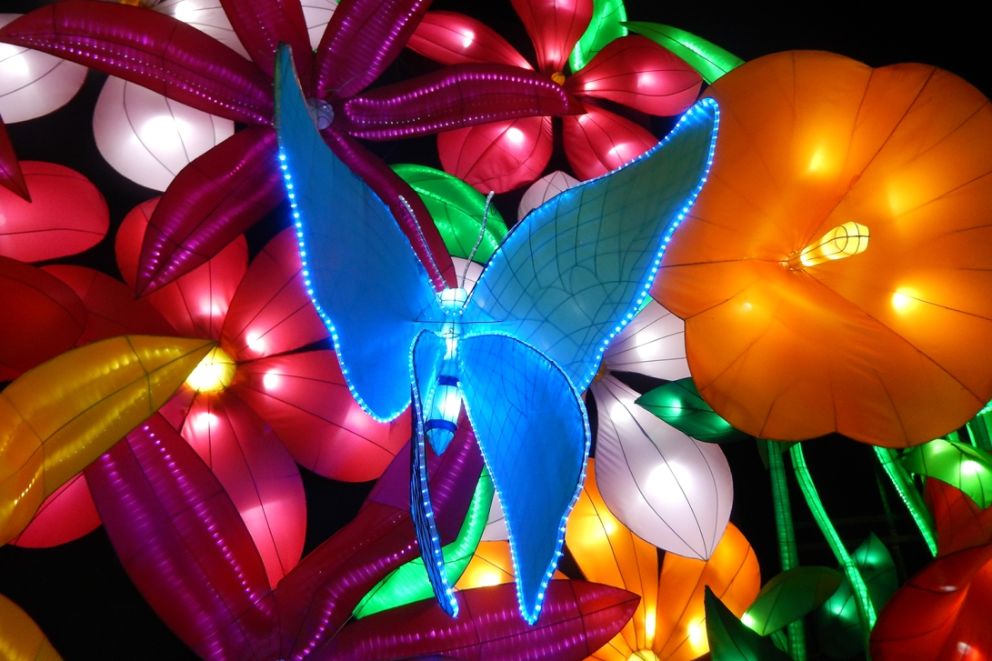 lighting-show-butterfly